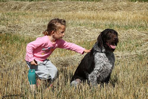 familiehund